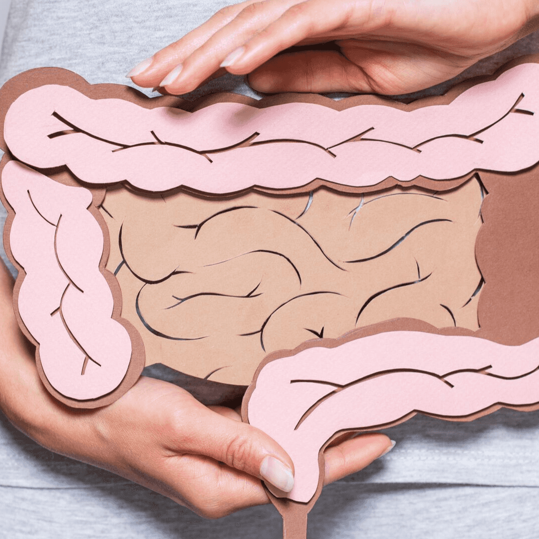 inner health cover image healthy gut